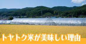 富山のトヤトク米の美味しい理由